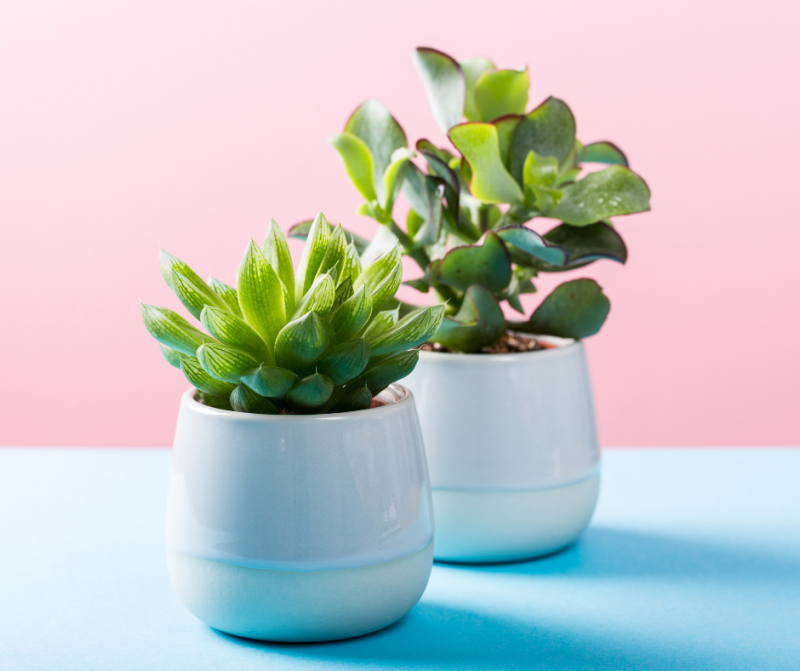 Best Faux Plants For A Modern Farmhouse