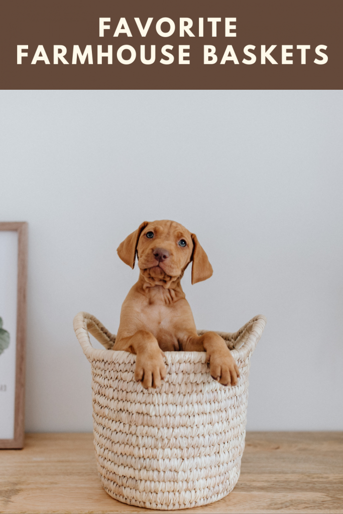 favorite modern farmhouse baskets - a woven basket with a doggie sitting inside